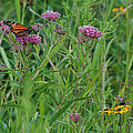 Monarch In The Wildflowers by Janice Adomeit