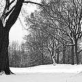 Monarch Park - 324 by Rick Shea