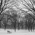 Monarch Park Ground Fog by Rick Shea