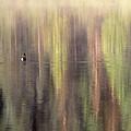 Monet's Duck by Ken Dietz