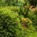 Monet's Garden Dreamscape by Sharon M Connolly