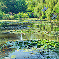 Monet's Water Lily Garden by Diana Haronis