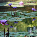 Monet's Waterlily Pond Number Two by Heather Kirk