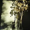 Money Plants Really Do Cast Shadows by Guy Ricketts