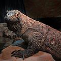 Monitor Lizard by Carlos Diaz