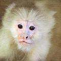 Monkey Portrait by Trina  Ansel