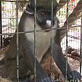 Monkey by Bozena Simeth