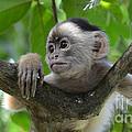 Monkey Business by Bob Christopher