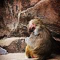Monkey Business by Karol Livote