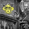 Monkey by David Pringle
