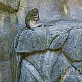 monkey I by Chuck Kuhn