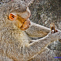 Monkey Playing With Tail by KJ DePace