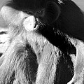 Monkey See Monkey Do by Dick Botkin