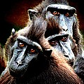 Monkey What Are You Looking At by Richard Dussault