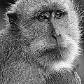 Monkey's Eyes by Ben Yassa