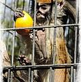Monkeys by Leslie Hunziker