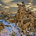 Mono Lake Tufa Reef by Blake Richards