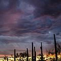 Monsoon Sunset by Stacy Fortson