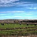 Montana Hayfield by Scott Carlton