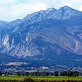 Montana by John Cole