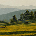 Montana Morning by Crista Forest