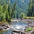 Montana River And Trees by Athena Mckinzie