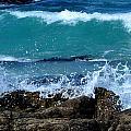 Monterey-3 by Dean Ferreira