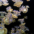 Monterey Aquarium Jellyfish by Greg Reed