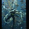 Monterey Bay Aquarium Diver by Keith Gondron