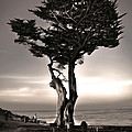 Monterey California - 02 by Gregory Dyer