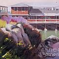 Monterey Fisherman's Wharf by Mary Hubley