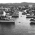 Monterey Harbor Full Of Purse-seiner Fishing Boats California 1945 by California Views Archives Mr Pat Hathaway Archives