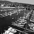 Monterey Marina With Fishing Boats In Slips Sept. 4 1961  by California Views Archives Mr Pat Hathaway Archives
