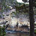 Monterey Rock Pines And Cypress by Viktor Savchenko