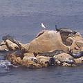 Monterey Sun Bath by Pharris Art