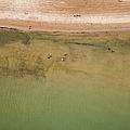 Montrose Beach Dog Park by Adam Romanowicz