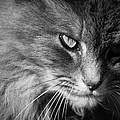 Moody Cat by Alexander Ferguson