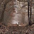 Moody December  The Feel by Marc Crutzen