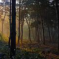 Moody Forest Happy Sun by Semmick Photo
