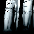 Moody Forest by Martin Hardman
