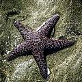 Moody Starfish I by Roxy Hurtubise