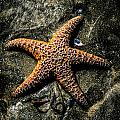 Moody Starfish II by Roxy Hurtubise