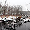 Winter's Moods by Debbie Oppermann