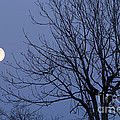 Moon And Bare Tree by Michal Boubin