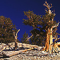 Moon And Bristlecone Pines by Paul W Faust -  Impressions of Light