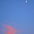 Moon At Sunset by Tara Potts
