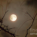 Moon Behind Branches by Deborah Smolinske