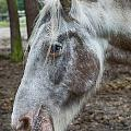 Moon Eyed Horse by Brothers Beerens