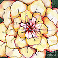 Moon Flower Out Of The Bloomers And Onto The Bloom by Shadia Derbyshire