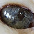 Moon In Cats Eye by Greg Wells